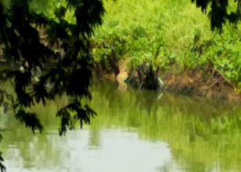 Protecting Forests for Water Security
